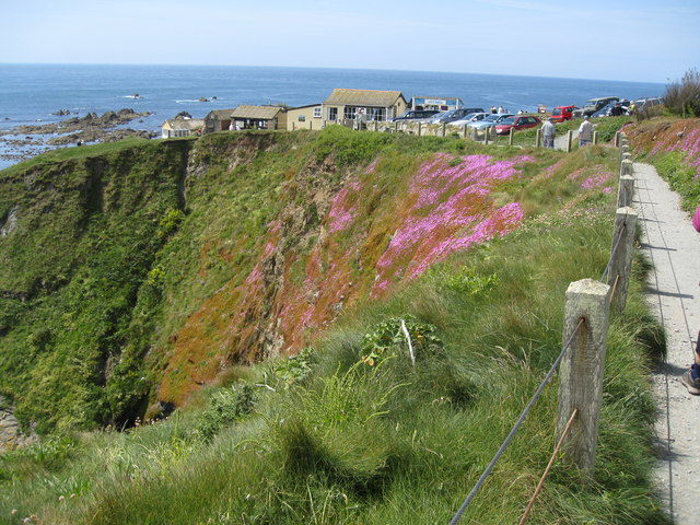 Cliff-edge Flowers - pink Hottentot Figs