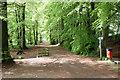 NN8521 : Lady Mary's Walk by Martin Addison