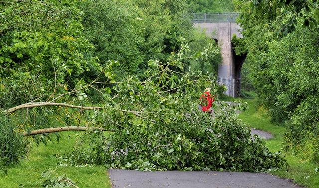Fallen trees, Belfast