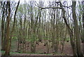 TQ0930 : Coppiced trees, Tittlesfold Copse by N Chadwick