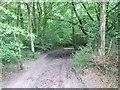 SY1397 : Bridlepath in Ring Plantation by David Smith
