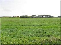 B8326 : Stranabrooey Townland by Kenneth  Allen