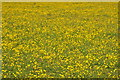 SU2899 : Field of buttercups by Philip Halling