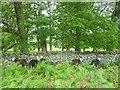 NY4219 : Sheltering Sheep by Michael Graham