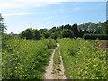 TR3564 : Footpath near Little Cliffsend by David Anstiss