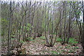 TQ8231 : Coppiced trees, Pookwell Wood by N Chadwick