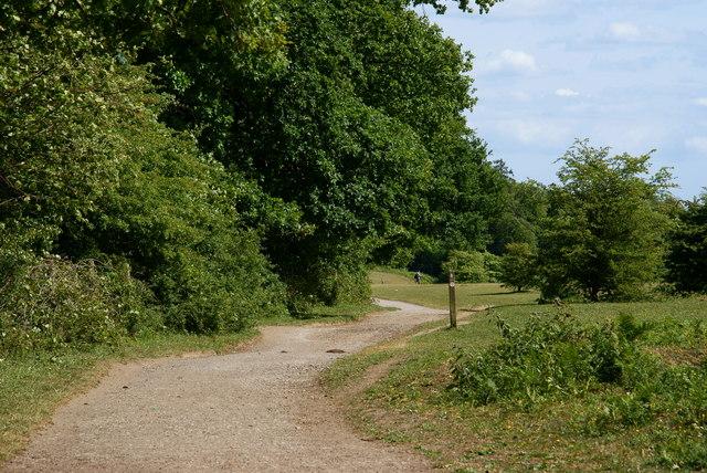 North Downs Way, Colley Hill, Surrey