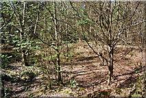 TQ4251 : Dried pond by the path, High Chart by N Chadwick