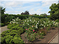 TL3800 : Waltham Abbey rose garden by Stephen Craven