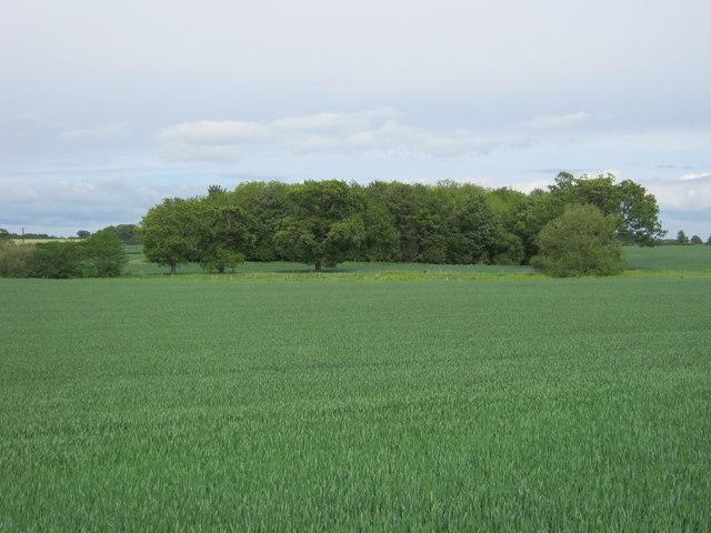 Kilnfield Plantation Denton