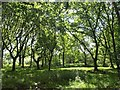 SS8418 : Woodland, Rackenford Common by Derek Harper