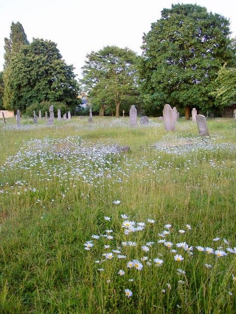 Pushing up daisies: Margravine Cemetery
