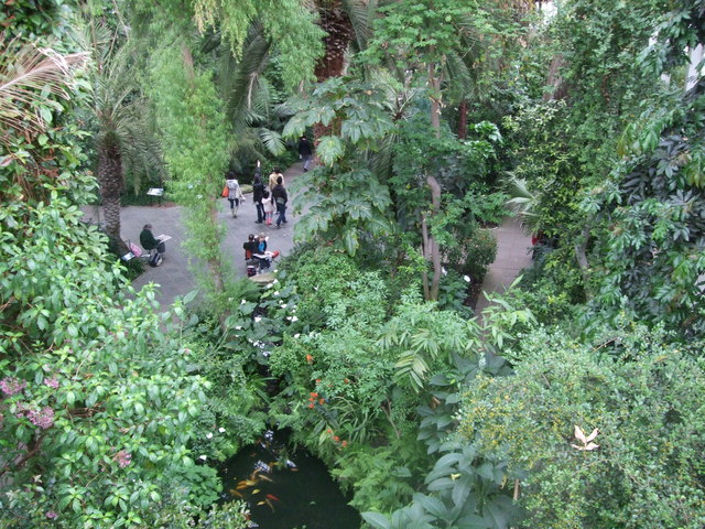 Treetop view - Temperate House