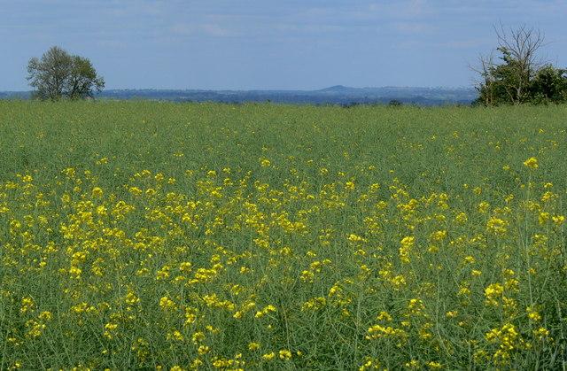 Farmland north of Low Spinney Wind Farm by Mat Fascione