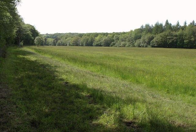 Meadow in the Little Dart valley