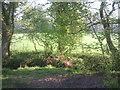 TQ4368 : Looking across the Kyd Brook towards Pond Wood by Marathon