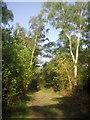 TQ4468 : Footpath in Petts Wood by Marathon