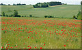 TM0749 : Poppies in May by Roger Jones