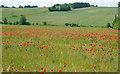 TM0749 : Poppies in May by Roger Jones