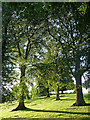 NZ0562 : Trees near Bywell by Stephen Richards