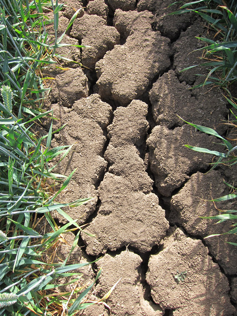 Cracked soil in Great Britain