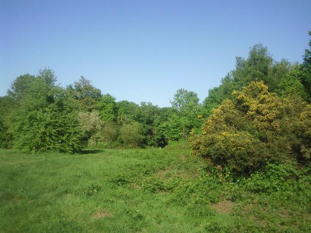 Clearing on Putney Heath