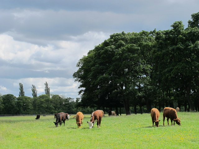 The lowing herd winds slowly oe'r the Leazes