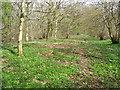 NZ5808 : Woodland path near Battersby by Maigheach-gheal
