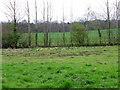 SE2686 : Molehills near Firby by Maigheach-gheal