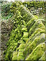 NZ6009 : Moss on the wall, Kildale by Maigheach-gheal