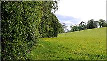 J4681 : Field and trees, Crawfordsburn Country Park (7) by Albert Bridge