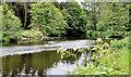 J3370 : River Lagan, Stranmillis, Belfast by Albert Bridge