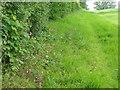 ST8428 : Field headland near Sedgehill by Maigheach-gheal