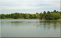 TQ5782 : Lake at Belhus by Roger Jones
