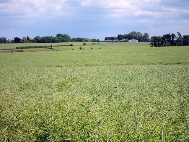 Crop fields off Shottenden Lane