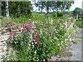 ST7236 : Wildflowers, South Brewham by Maigheach-gheal