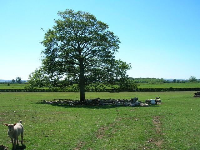 Grazing Land, Manor House Farm