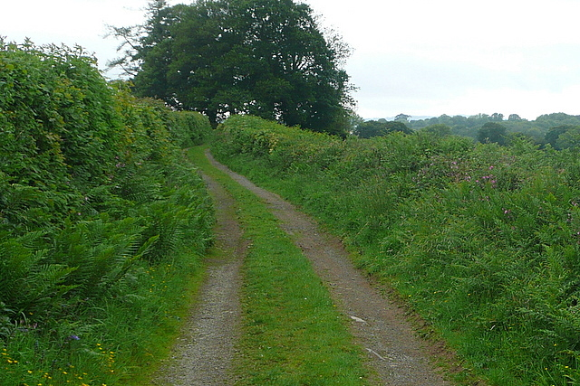 On the West Devon Way
