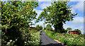 J3149 : The Park Road near Dromara by Albert Bridge
