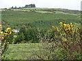 W1547 : Forestry - Clodagh Townland by Mac McCarron