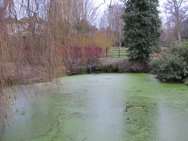 Pond, Hayes Recreation Gardens (3)