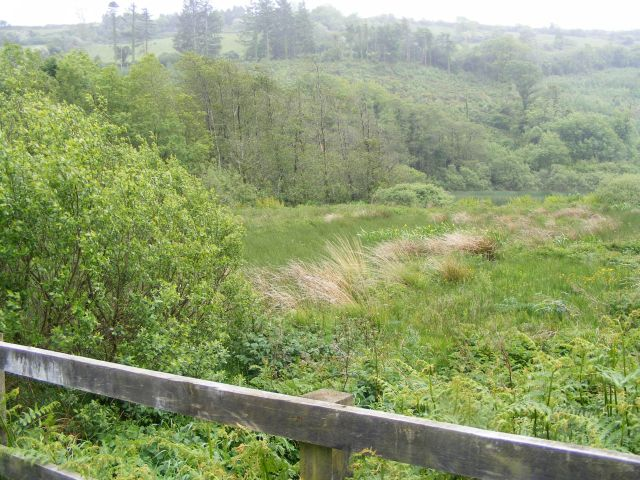 East end of Curraghalicky Lake - Drinagh East Townland