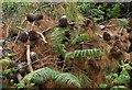 SX8962 : Pine cones, Hollicombe by Derek Harper