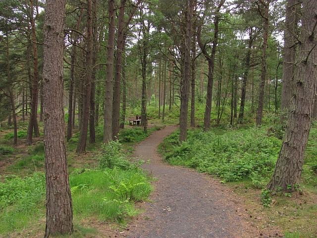 Picnic table, Devilla Forest