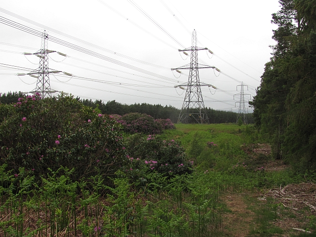Power lines, Devilla Forest