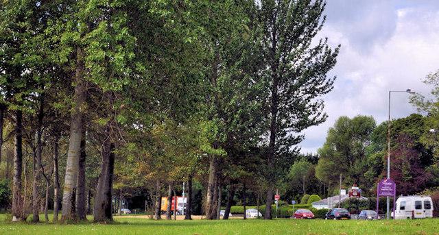 Roadside trees, Jordanstown