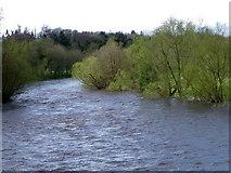 NZ2115 : River Tees, Piercebridge by Maigheach-gheal