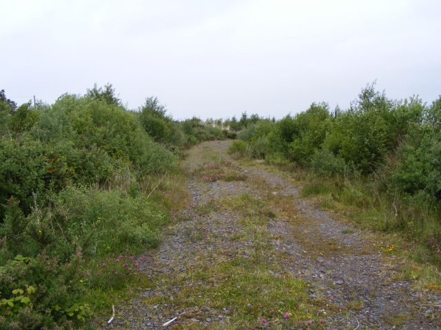 Woodland access track - Derrygortnacloughy Townland