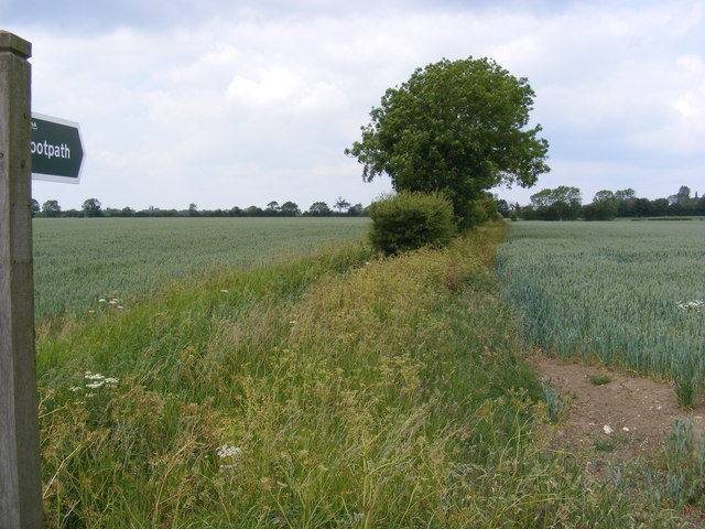 Footpath to Hollow Lane Byway