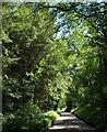 SS9418 : Road through Shilhay Copse by Derek Harper